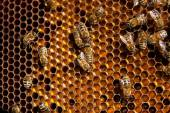 Close up view of the working bees and collected pollen in the ho — Stock Photo