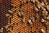 近处的工作蜜蜂和收集的花粉在视图浩 — 图库照片