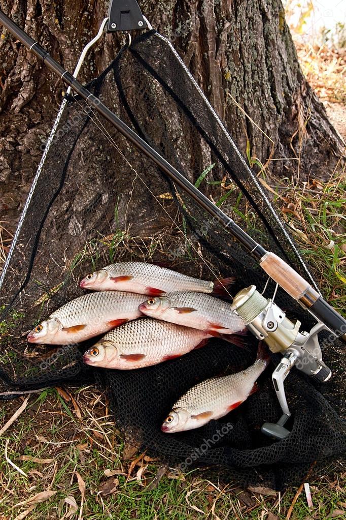 пресноводные рыболовные рыбы