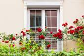 Window with roses — Stock Photo
