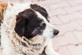 Old dog — Stock Photo