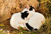 Cat sleeping on the grass — Stock Photo