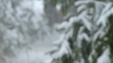 Snowfall during a storm — Stockvideo