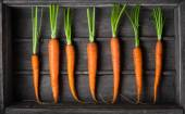 Fresh young carrots — Stock Photo
