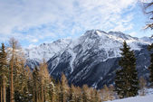 The mountain in the snow, sky with clouds, snow-covered spruce — Stockfoto