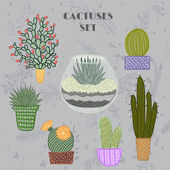 Flat colorful illustration of succulent plants and cactuses in pots and aquarium. Vector botanical graphic set with cute florals. — ストックベクタ
