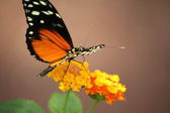 Butterlfly garden in Gravenmacher — ストック写真