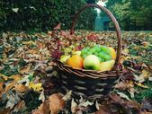 Basket of fruits in autumn park — Stock Photo