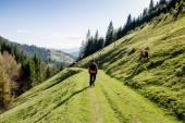 Spring landscape of the Carpathians mountains — Stock Photo