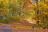 Colorful foliage of deciduous trees along the park trail. — Fotografia Stock