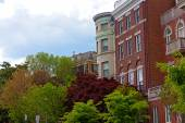 Shades of green color and townhouses in Washington DC during spring. — Stockfoto