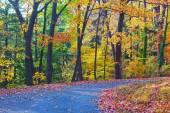 Uma passarela ao longo de árvores de folha caduca no outono. — Fotografia Stock