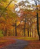 Uma trilha de bicicleta ao longo de árvores de folha caduca no outono. — Fotografia Stock