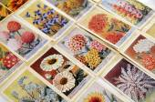 Seed packets-flowers2 — Stock Photo