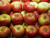 Group of red apples in row — Stock Photo