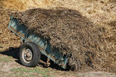 Big dung pile on a wagon at a horse farm summertime — Stock Photo