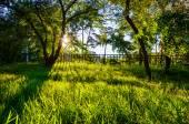 家の近くの庭 — ストック写真