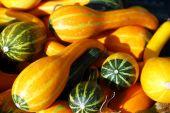 Small decorative pumpkins — Stock Photo