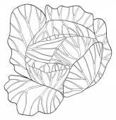 Delightful garden - Round cabbage — Stock Vector