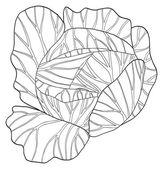 Delightful garden - Round cabbage — Stock Photo