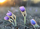 La fleur — Photo