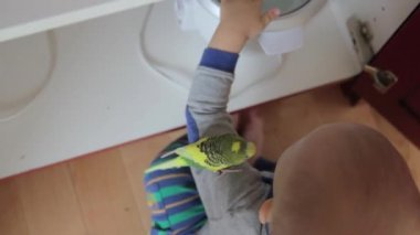 Boy playing with parakeet — Stock Video