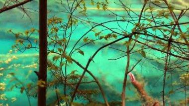 Lake in a Juizhaigou Valley — Stock Video