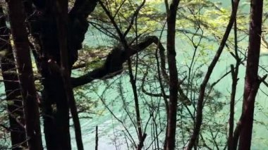 Forest lake in jiuzhaigou valley — Stock Video