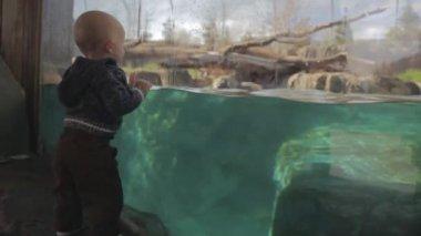 Boy watching a polar bear — Stock Video
