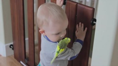Toddler with a bird — Stock Video