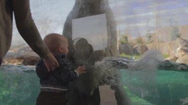 Polar bear at a zoo — Stock Video