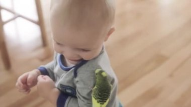 Boy with parakeet bird — Stock Video
