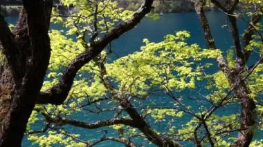 Beautiful forest lake in Jiuzhaigou valley — Wideo stockowe