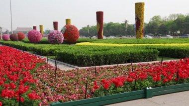 Beautiful gardens at Tiananmen square — Stock Video