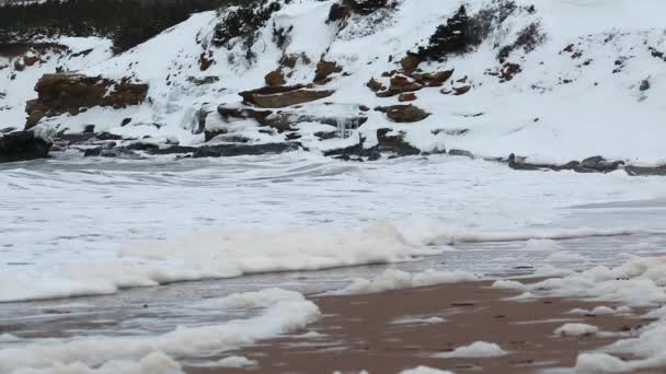 Winter scene of snow covered coast — Vídeo de stock