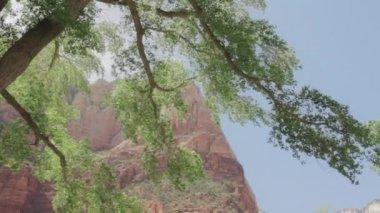 Cliffs at Zion national park — Stock Video