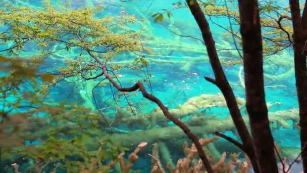 Aguas cristalinas de un lago — Vídeo de stock
