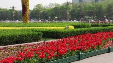 Gardens in Tiananmen square — Stock Video