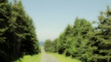 Road through a dense pinetree forest — Stock Video