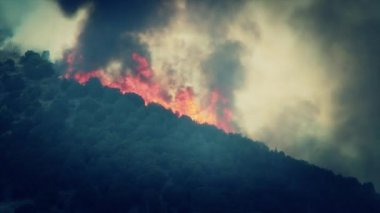 Raging wildfire burning — Stock Video