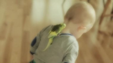 Boy playing with his parrot — Stock Video