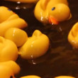 Rubber ducky game — Stock Video #70593053