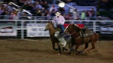 Rodeo Steer Wrestling — Stock Video