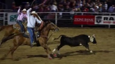 Cowboys roping at the rodeo — Stock Video