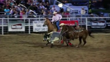 Cowboys steer wrestling at the rodeo — Stock Video