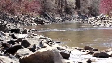 Mountain river in the spring — Stock Video