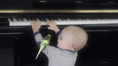 Toddler playing the piano with his bird — 图库视频影像