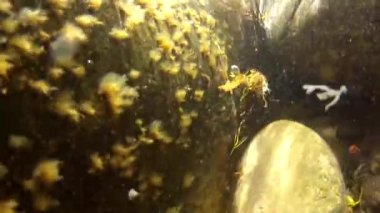 Colorful sea weed — Stock Video