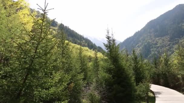 Sendero de madera — Vídeo de stock