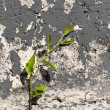 Plant Growing out of Concrete — Stock Photo #74376821